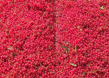 Kvas z červených ríbezlí 0.45€/kg
