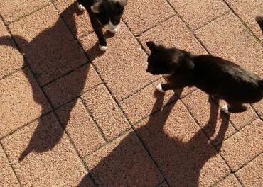 Darujem 2 malé mačky