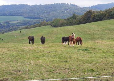 Prijmem zamestnanca na farmu s chovom koni