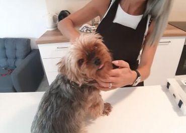 Royal Pet Cut - strihanie domácich miláčikov u Vás doma