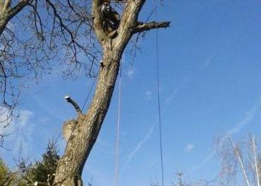 vyrub rizikovych stromov