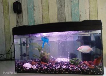Akvárium -  celé kopmlet aj s rybičkami