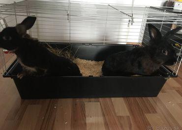 Darujem zajkov