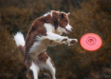 Výcvik psov - online