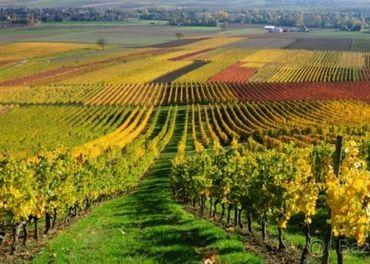 Praca Vinohrady
