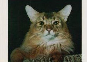 Mahelková, Květoslava: Choroby koček