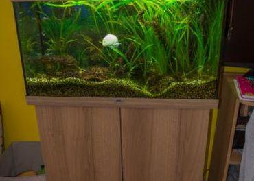 predám akvárium Juwel 250L