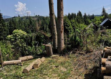 Ponúkame rizikový výrub stromov