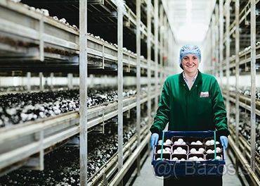 Zber Húb - Šampiňónová Farma, Írsko Od €10.10 Za Hodinu