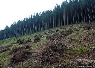 práca v lese