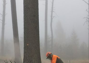 Praca v lese CZ
