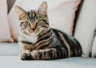 Stráženie a ubytovanie pre mačky
