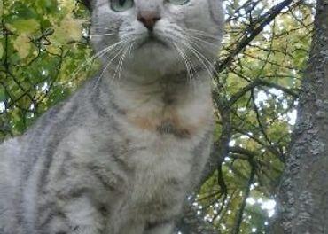 Hľadá sa mačička Cyra
