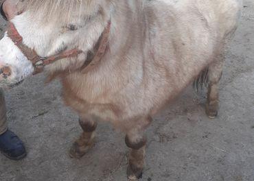 Ló-kôň-Rebec