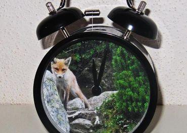 Budík líška