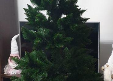 Stromček borovica