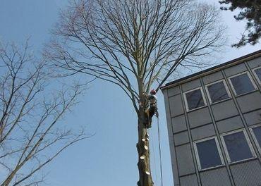 Rizikove pilenie stromov,kosenie a cistenie pozemkov lesn