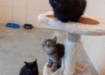 Darujem roztomilé drobné mačiatka -hladaju DOMOV