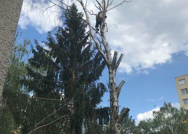 Pílenie stromov na rizikových miestach, výškové práce