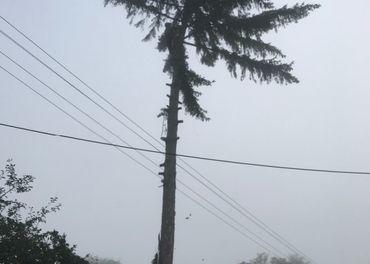 Pílenie rizikových stromov stromolezeckou technikou