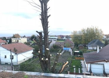 Pílime stromy na ťažko dostupných miestach