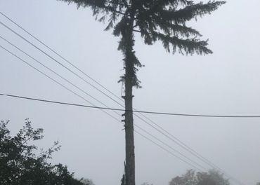 Výškarina, pílenie stromov horolezeckou technikou